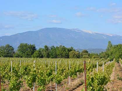 Découvrez aussi le Mont Ventoux lors de vos vacances à Laudun