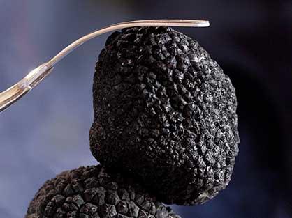 Goutez la truffe noire specialité du Gard pour vos vacances
