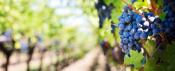 Dégustez notre bon vin cote du rhone en séjournant à 2 pas de la coopérative Laudun-Chusclan